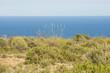 Coastal steppe in Santa PolaAlicante, Spain