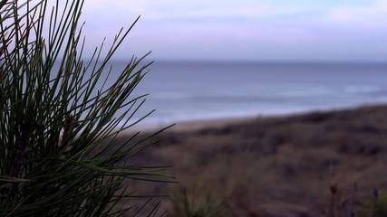 Dune ocean