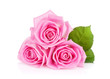 canvas print picture - Three pink rose flowers