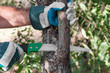 Pruning tree - 78594356