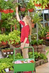 Frau im Blumenladen kauft Pflanzen