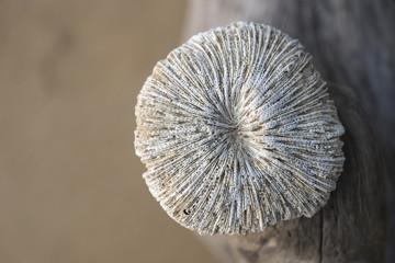 dry sea sponge closeup