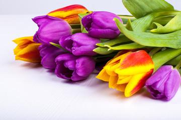 Tulpen liegend