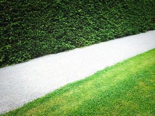 Path near green hedge