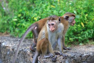 Monkeys in park