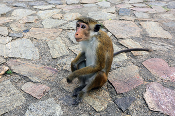Monkey on pavement