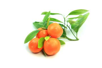Fresh Kumquat fruits with leaves on white background
