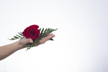 Mani con rosa rossa