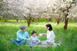 Young family picnicking in blooming apple garden