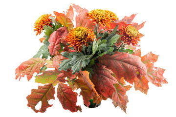 Beautiful autumn bouquet chrysanthemums with oak leaves
