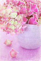 Pink hydrangea flowers ,vintage style ,grunge paper background.