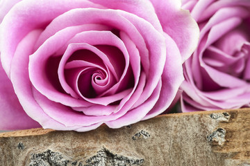 Macro shot of a pink rose with a shallow depth-of-field (DOF)