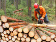 The Lumberjack working in a forest. - 78605716