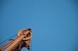 canvas print picture - Umlenkrolle am Kran vor blauem Himmel
