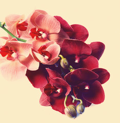 Beautiful orchid on beige background