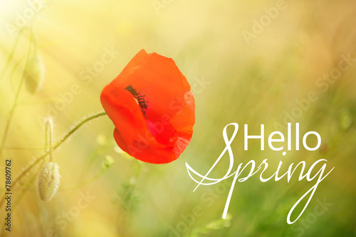Foto op Canvas Poppy Poppy flower, outdoors. Hello spring concept