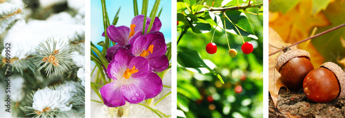 Foto op Aluminium Krokussen Four seasons collage: winter, spring, summer, autumn