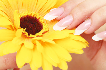 A female hand touching a flower