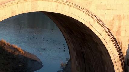 Seagulls swimming in the river Tiber. Rome