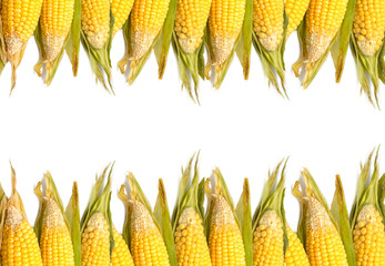 Fresh organic corn ,food background