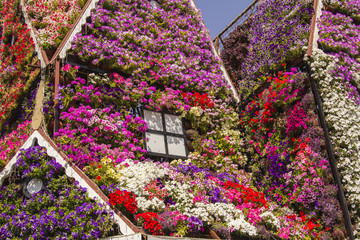 House of colorful flowers petunias in Miracle Garden