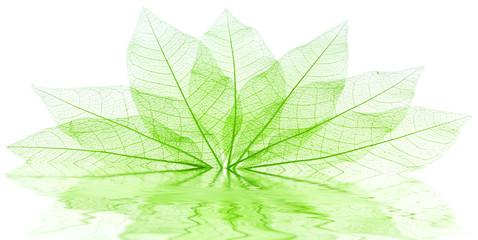 feuilles vertes transparentes