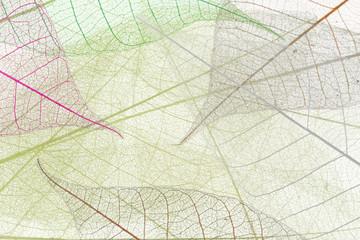 fond de feuilles transparentes