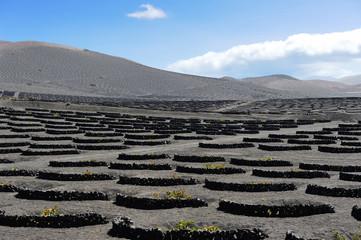 vineyards at La Geria Valley, Lanzarote Island, Canary Islands,