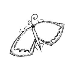 Butterfly sketch. Vector illustration. Isolatrd on white