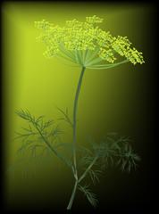 reen dill blossom on dark background