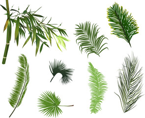 palm and bamboo green branches isolated on white