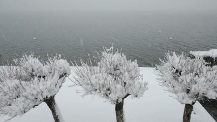 Trees and lake under snowfall