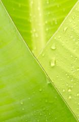 jeune feuille de bananier, pliage enveloppe