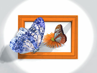 butterfly and frame
