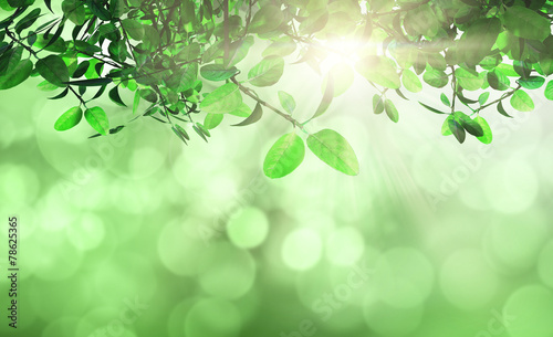 canvas print picture Leaves and grass against a defocussed background