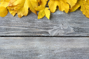 Yellow maple leaf on wooden boards