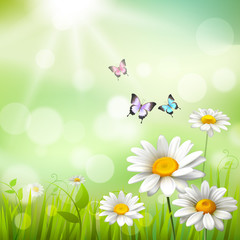 Daisies Summer Background