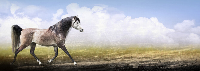 thoroughbred horse running trot on nature background , banner