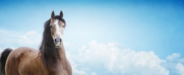 Arabian Horse on sky background, banner