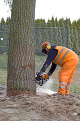 Baumschnitt