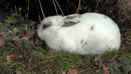 Weißes Kaninchen schläft in der Natur
