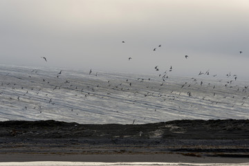 Seabirds and glacier
