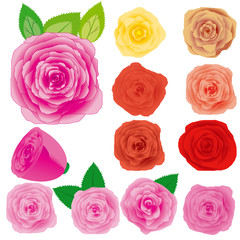 Set of different roses, vector illustration