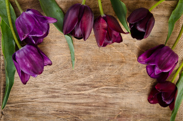 frame for photo from fresh tulips