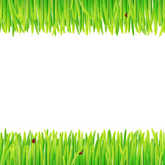 background of spring grass