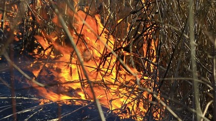 cane, burns on the river
