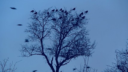 flock of birds flying against a tree