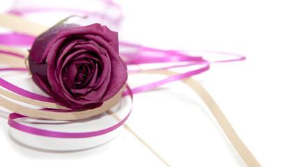 fleur rose pourpre