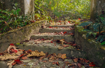 Beautiful view of stairway to jungle, ,Thailand