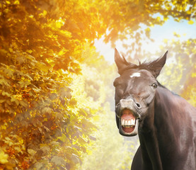 Funny horse in autumn foliage in sunshine